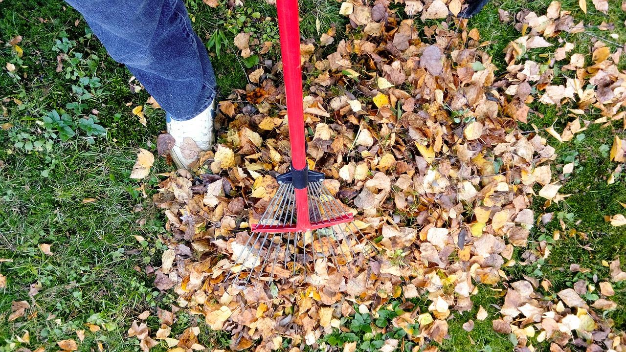 garden cleanup tips