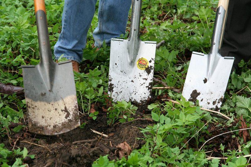 garden renovation budget