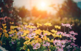 Summer Garden Maintenance Tips