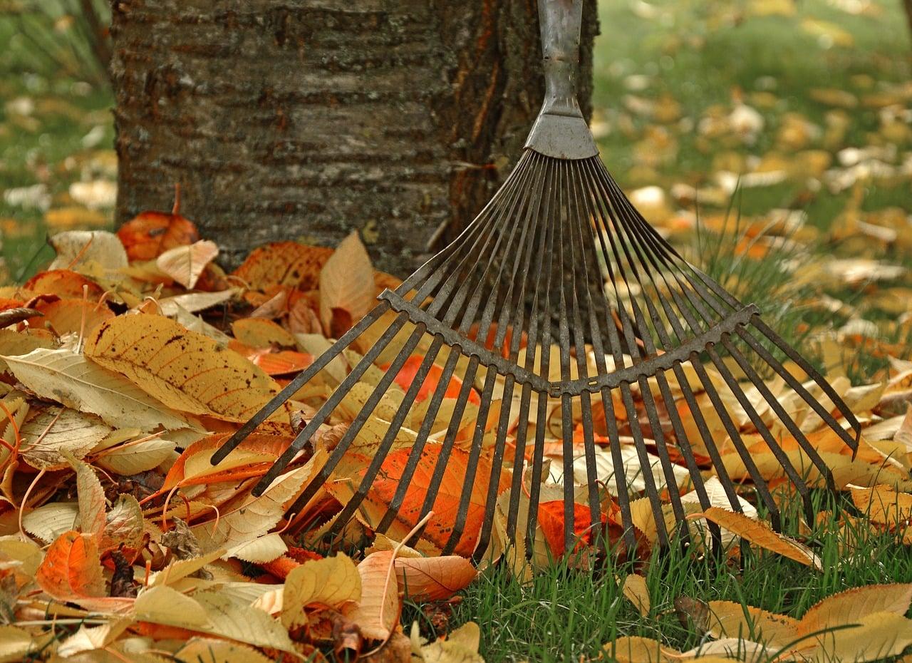 winter garden maintenance tips